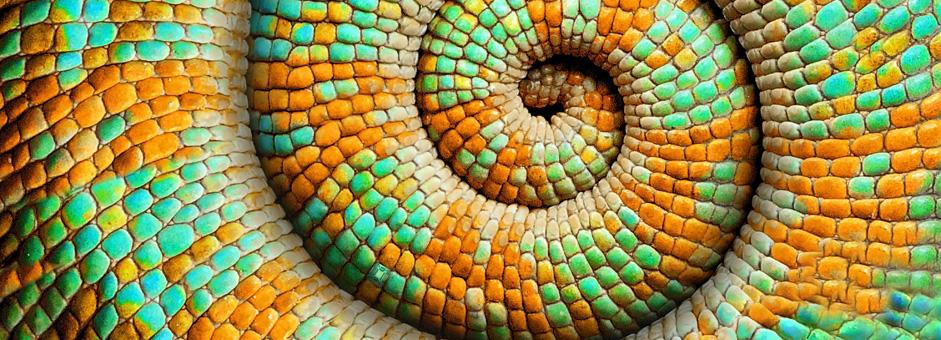 header-snake