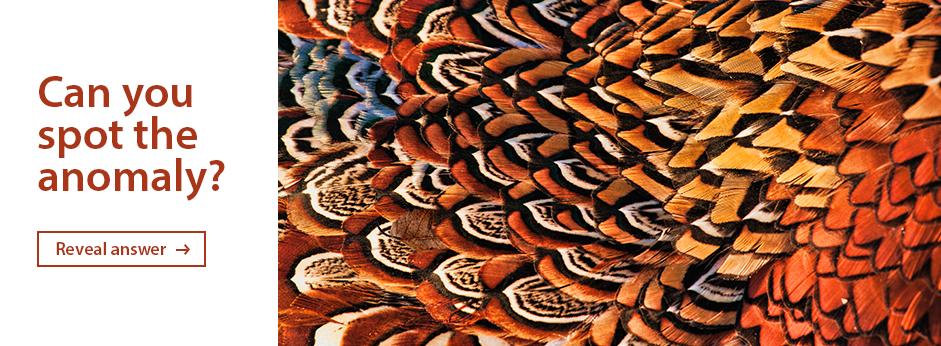 Snake_Leaves_Web_Banner_02_AW