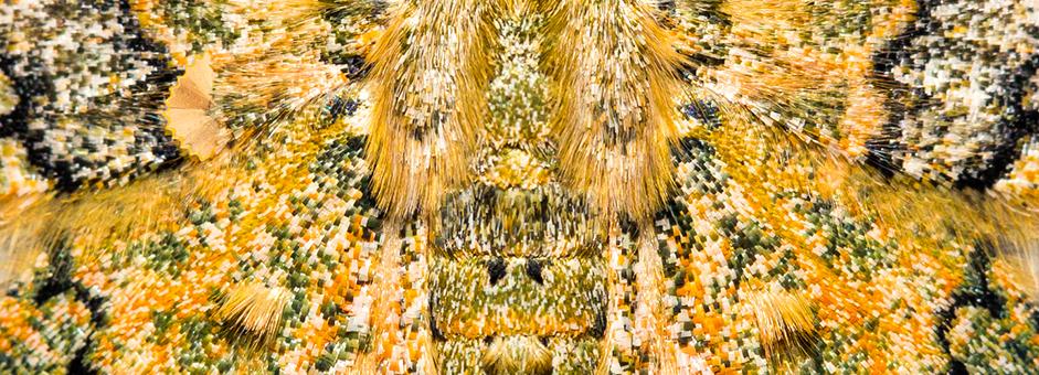 header-moth
